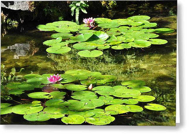 Lilly Pads Greeting Cards - Lilly Pads Greeting Card by Kirt Tisdale