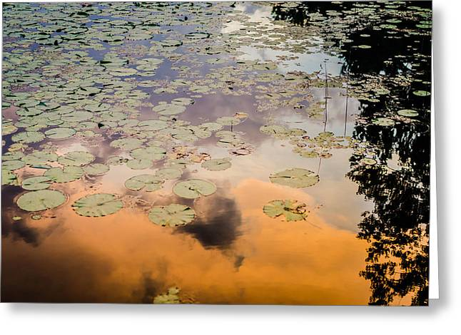 Lilly Pads Greeting Cards - Lilly Pads Sunset Reflection Greeting Card by Anthony Doudt