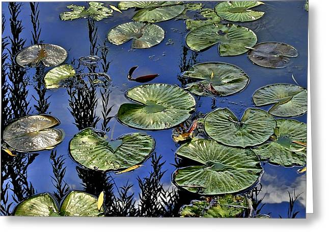 Wonderous Greeting Cards - Lilly Pond Greeting Card by Frozen in Time Fine Art Photography