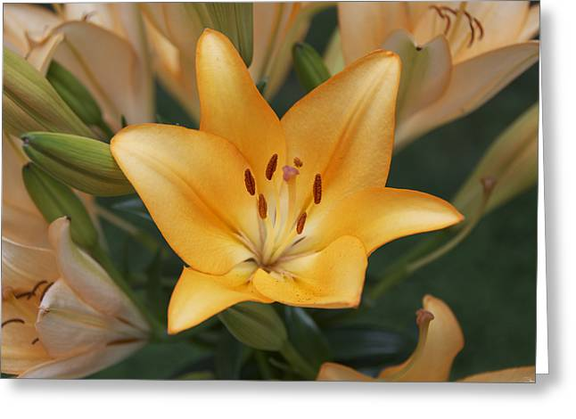 Buy Photos Online Greeting Cards - Lily Greeting Card by Steven  Michael