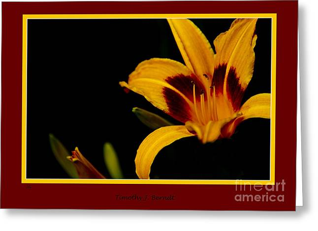 Lilly Greeting Card by Timothy J Berndt