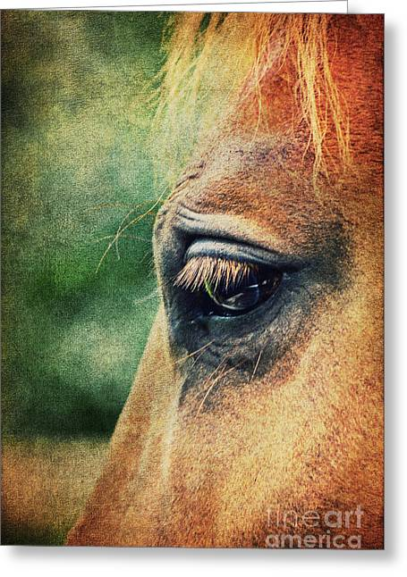 Horse Images Mixed Media Greeting Cards - Lillys Eye Greeting Card by Angela Doelling AD DESIGN Photo and PhotoArt