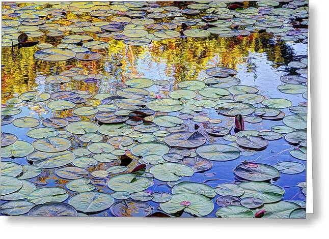 Lilly Pad Greeting Cards - Lillys Pad Greeting Card by Michelle Enright