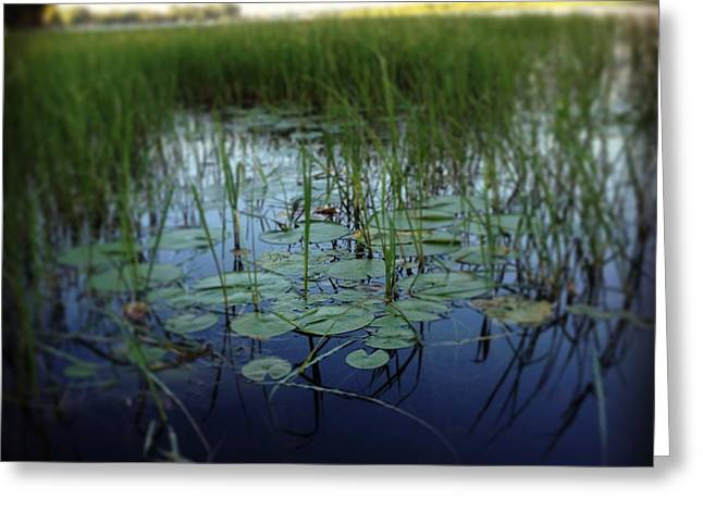 Lilly Pads Greeting Cards - Lillys Pad Greeting Card by Nanda Wubs