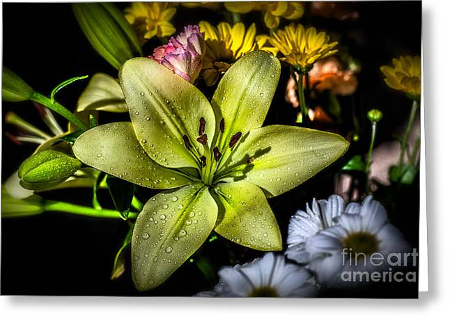 Blossom Digital Art Greeting Cards - Lily Greeting Card by Adrian Evans
