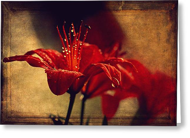 Living Beings Greeting Cards - Lily After The Rain  Greeting Card by Maria Angelica Maira