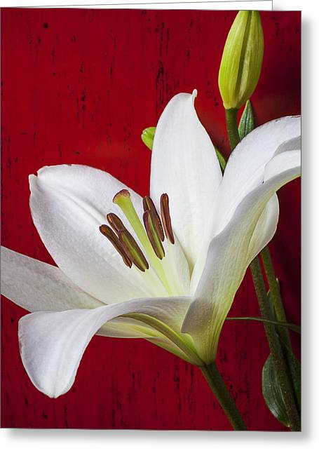 Stamen Greeting Cards - Lily against red wall Greeting Card by Garry Gay