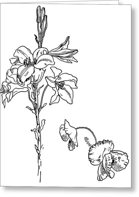 Pen And Ink Drawing Greeting Cards - Lily and Poppy Flower Line Drawing Greeting Card by