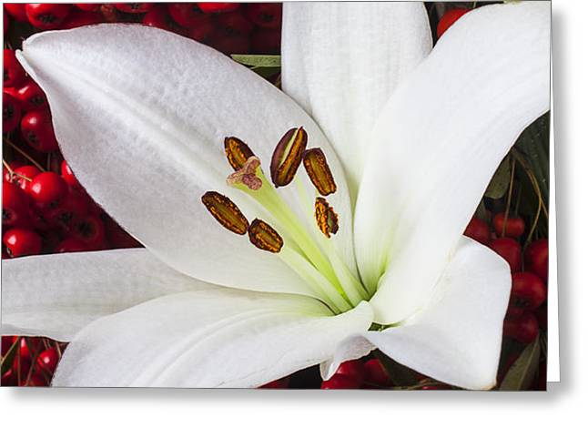 lily and Pyracantha Greeting Card by Garry Gay