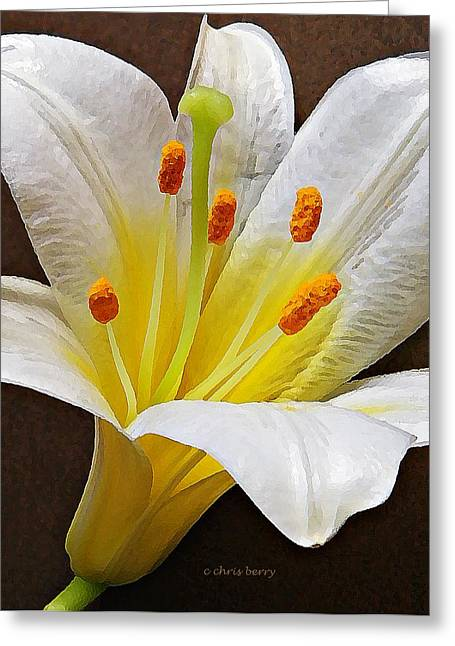 Yearly Greeting Cards - Lily  Greeting Card by Chris Berry