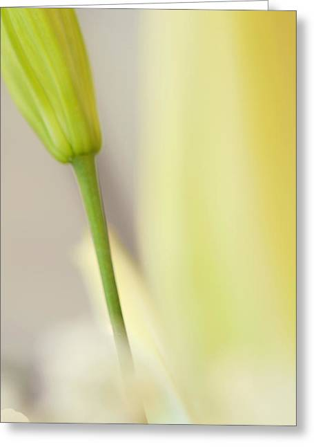 Lilies Greeting Cards - Lily Delight. Floral Abstract Greeting Card by Jenny Rainbow