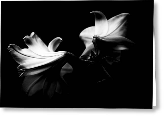Bouquet Amaryllis Greeting Cards - Lily flower Greeting Card by Joel  Bourgoin
