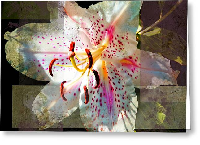 Renewing Greeting Cards - Lily from Whitefish Point Michigan Greeting Card by Evie Carrier