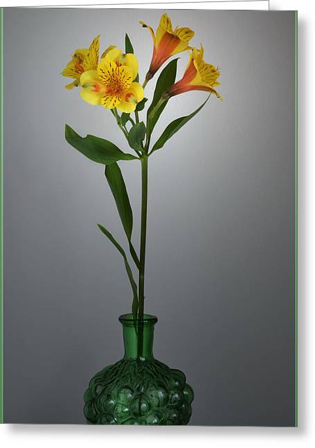 Peruvian Lily Greeting Cards - Lily In A Bottle. Greeting Card by Terence Davis