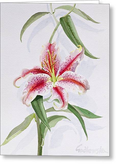 Botanical Greeting Cards - Lily Greeting Card by Izabella Godlewska de Aranda