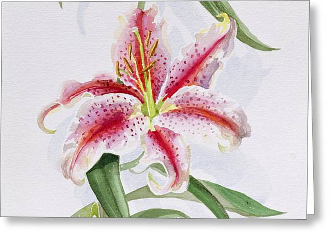 Lily Greeting Card by Izabella Godlewska de Aranda