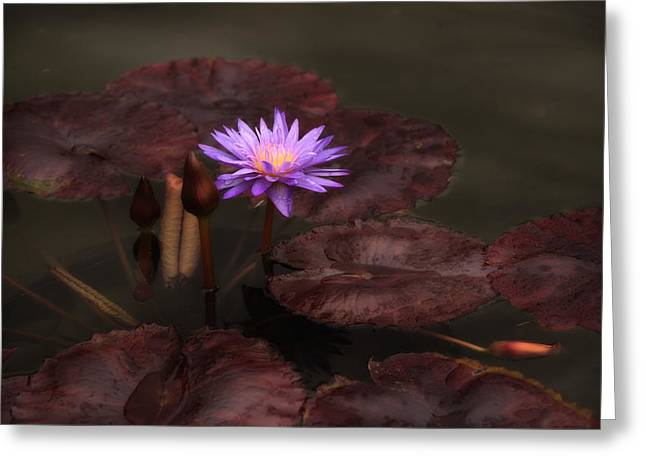 Floating Flowers Greeting Cards - Lily at Dusk Greeting Card by Jessica Jenney