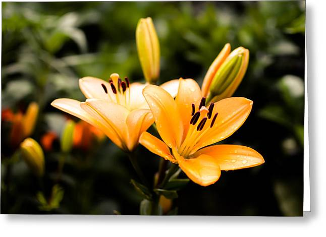 Stigma Greeting Cards - Lily Greeting Card by Marco Oliveira