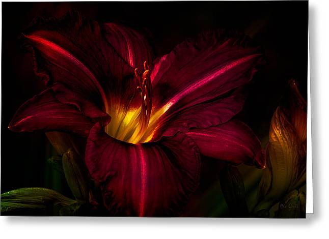 Pedal Greeting Cards - Lily Number Nine Greeting Card by Bob Orsillo