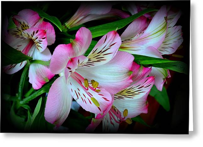 Lily Of The Incas Greeting Cards - Lily of the Incas Greeting Card by Bishopston Fine Art