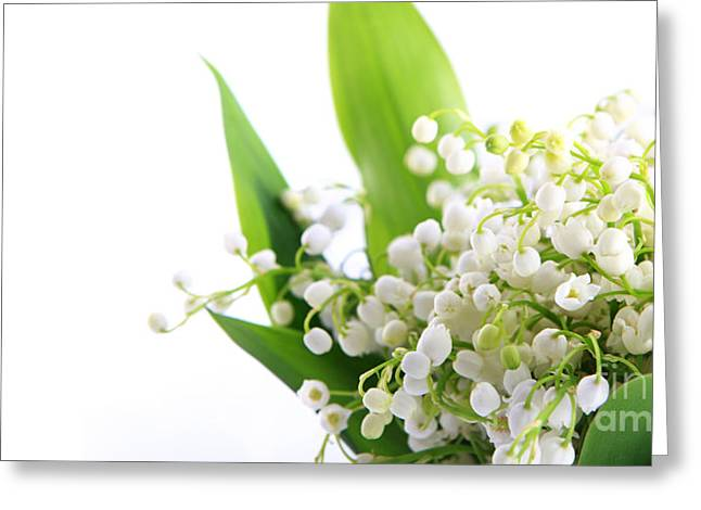 Lily of the Valley Art Greeting Card by Boon Mee