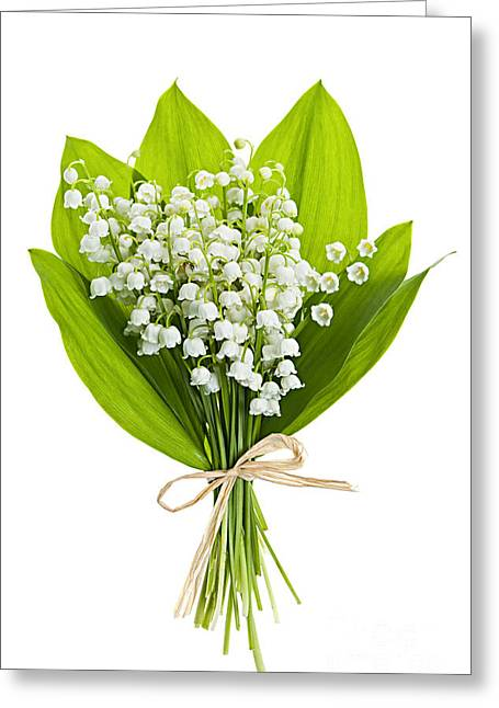 Flora Greeting Cards - Lily-of-the-valley bouquet Greeting Card by Elena Elisseeva