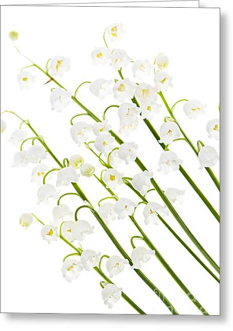 Fragrant Flowers Greeting Cards - Lily-of-the-valley flowers Greeting Card by Elena Elisseeva