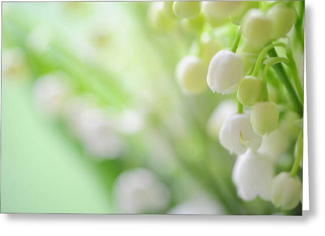 The Mint Greeting Cards - Lily of the Valley. Spring Delight Greeting Card by Jenny Rainbow