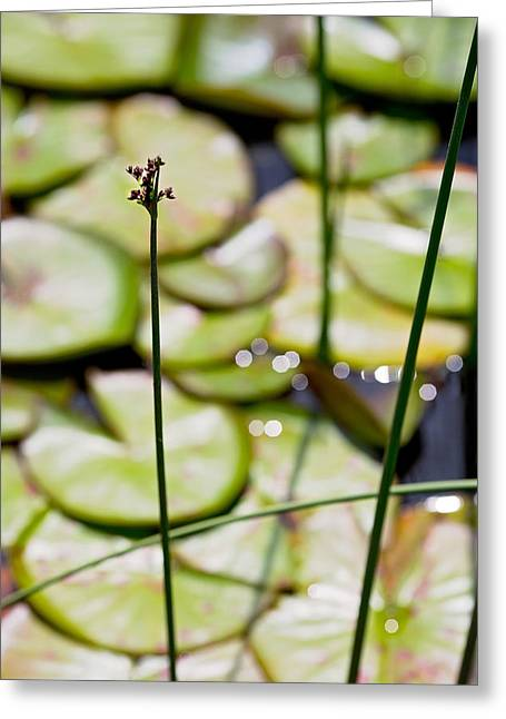 Lily Pad Greeting Cards - Lily Pad Abstract 1 Greeting Card by Rebecca Cozart