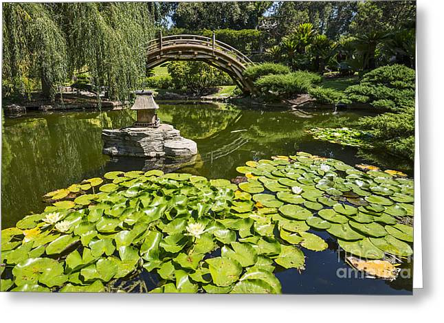 Willow Lake Greeting Cards - Lily Pad Garden - Japanese Garden at the Huntington Library. Greeting Card by Jamie Pham