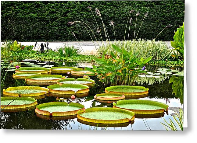 Lilly Pad Greeting Cards - Lily Pad Garden Greeting Card by Frozen in Time Fine Art Photography