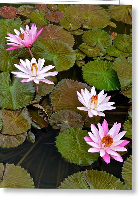Day Lilly Greeting Cards - Lily Pad Haven Greeting Card by Frozen in Time Fine Art Photography