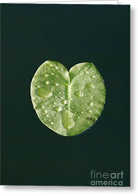 Nymphaea Plants Greeting Cards - Lily Pad Greeting Card by Mark Newman
