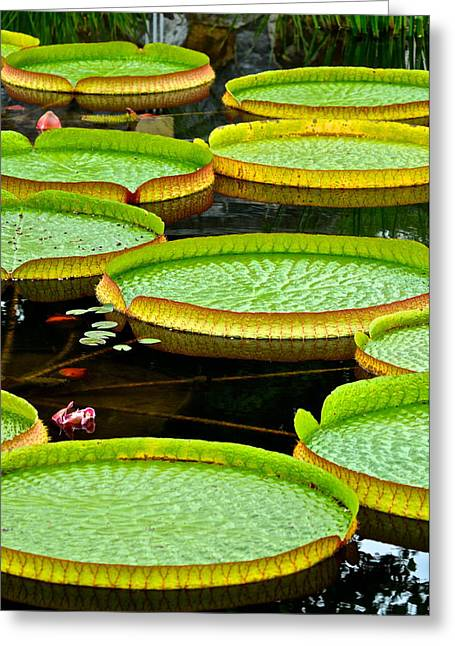 Visceral Greeting Cards - Lily Pad Pond Greeting Card by Frozen in Time Fine Art Photography