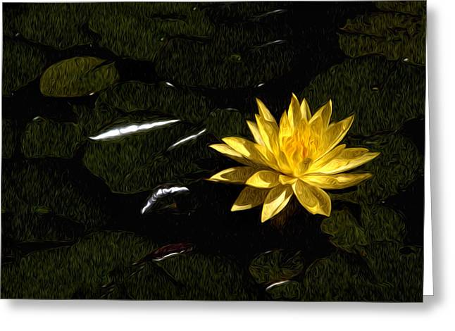 Lily Pad Greeting Cards Greeting Cards - Lily Pad Greeting Card by Xavier Cardell