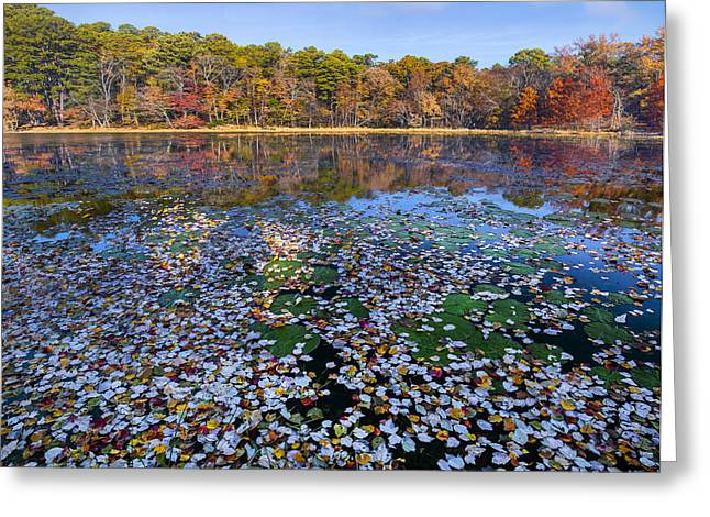 Lily Pads And Autumn Leaves Greeting Card by Tim Fitzharris