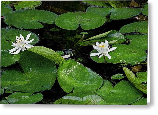 Historic Home Greeting Cards - Lily Pads and Flowers DB Greeting Card by Rich Franco