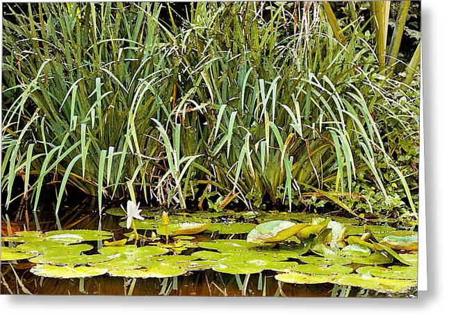 Historic Home Greeting Cards - Lily Pads and Rushes DB Greeting Card by Rich Franco