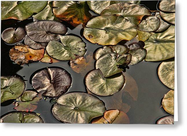 Bill Kesler Greeting Cards - Lily Pads Greeting Card by Bill Kesler