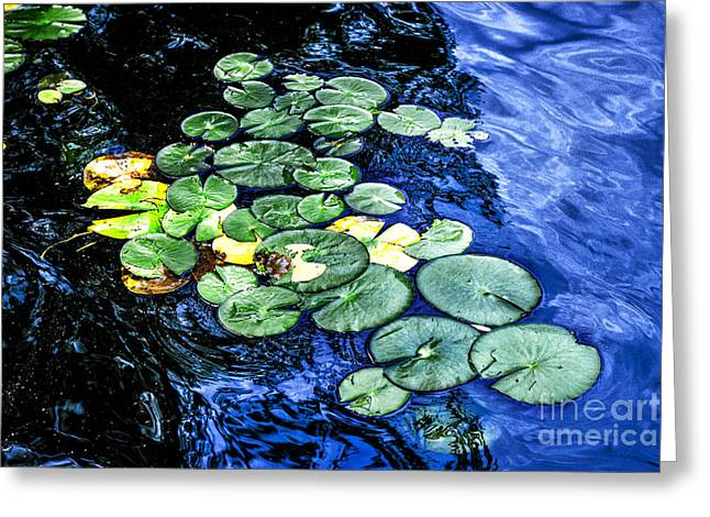 Lotus Lily Greeting Cards - Lily pads Greeting Card by Elena Elisseeva