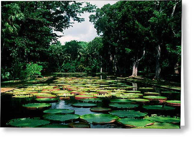 Botanical Greeting Cards - Lily Pads Floating On Water Greeting Card by Panoramic Images