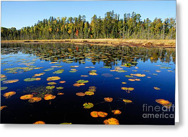 Boundary Waters Greeting Cards - Lily Pads in Autumn Greeting Card by Larry Ricker