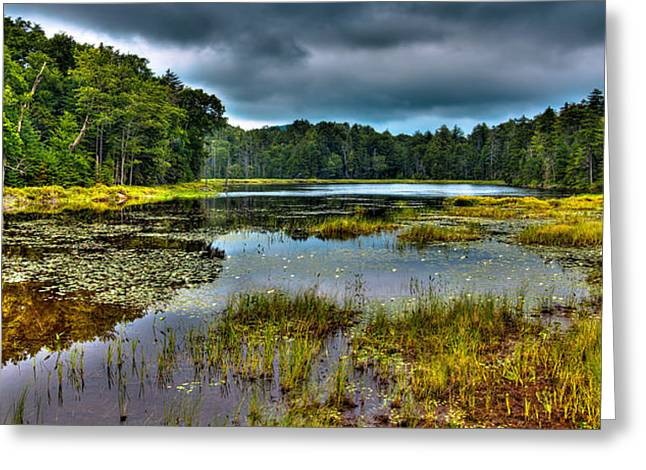 Lily Pads On Fly Pond Greeting Card by David Patterson