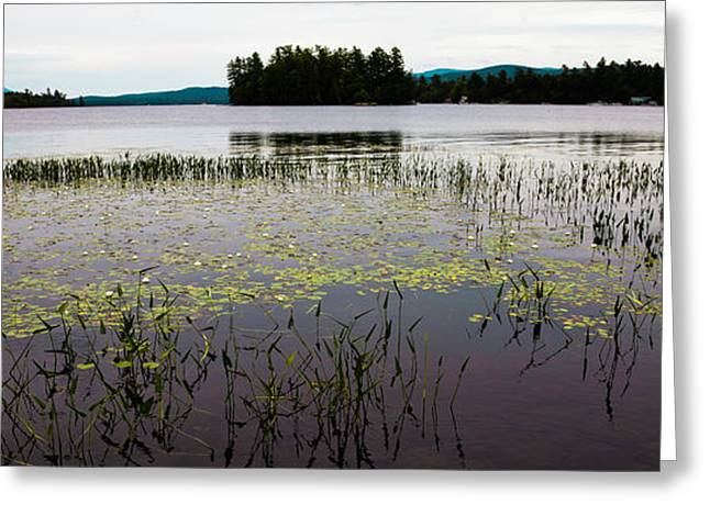 Fir Trees Greeting Cards - Lily Pads on Raquette Lake Greeting Card by David Patterson