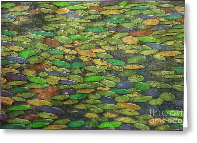 Impressionist Photography Greeting Cards - Lily Pads Greeting Card by Tom York Images