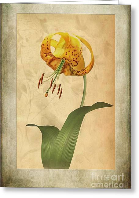 Lilium Greeting Cards - Lily painting with textures Greeting Card by John Edwards
