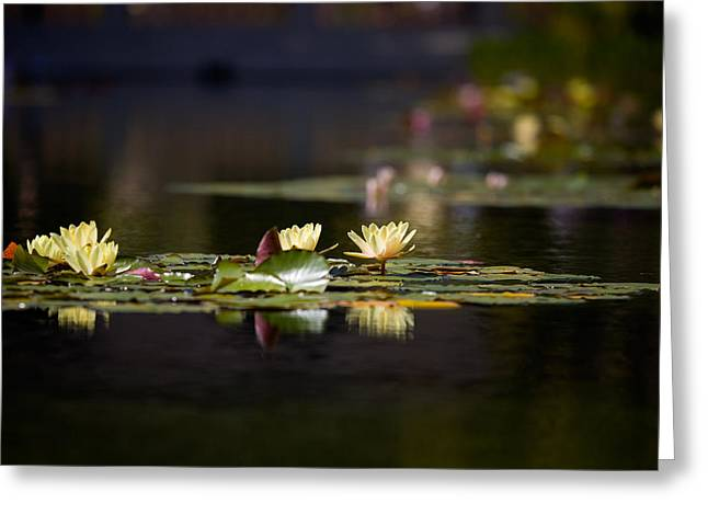 Pond.  Greeting Cards - Lily Pond Greeting Card by Peter Tellone