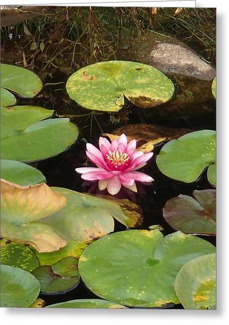 Robert Nickologianis Greeting Cards - Lily Pond Greeting Card by Robert Nickologianis