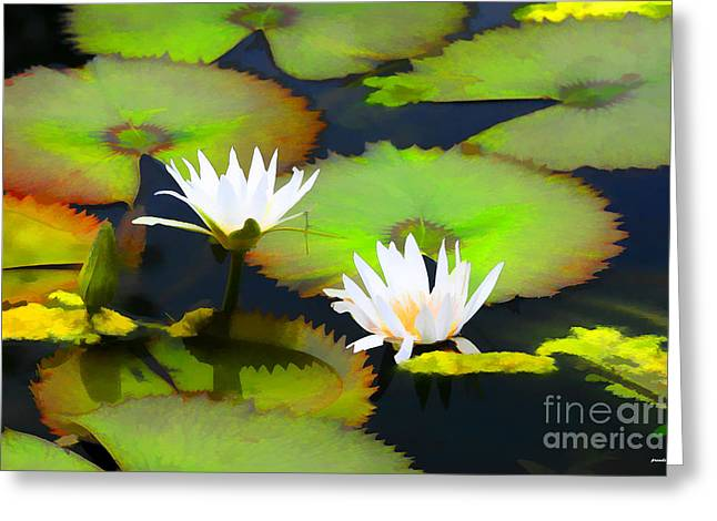Flower Photographers Greeting Cards - Lily Pond Bristol Rhode Island Greeting Card by Tom Prendergast