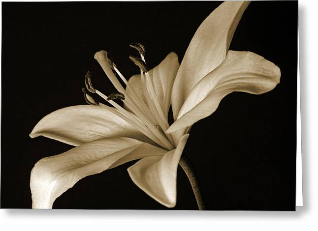 Whilte Flower Greeting Cards - Lily Greeting Card by Sandy Keeton